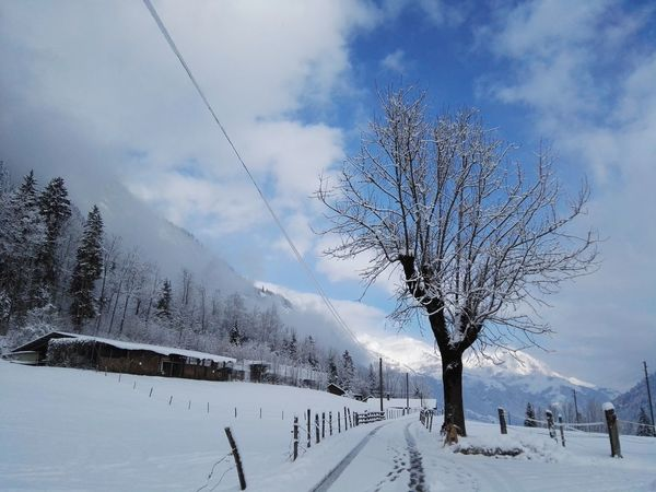 Switzerland Myswitzerland Hometown Kandergrund Bernese Oberland Kandertal Winter Tree Fog Blue Sky Nature Day No People
