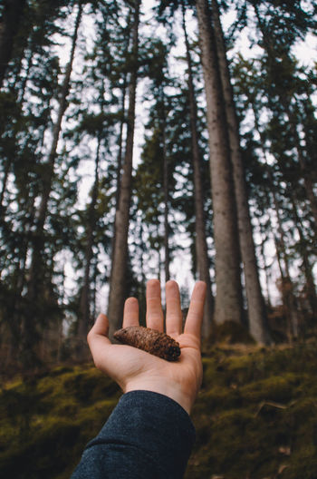 Cropped hand holding pine cone against trees in forest