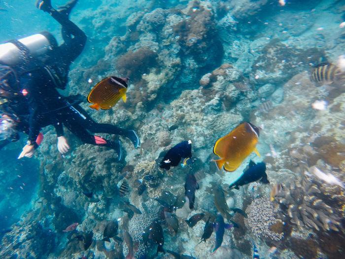 Blue Coral Fish Greenisland Nature Outdoors Sea Sea Life Skindiving Taiwan UnderSea Water Wildlife Nature's Diversities