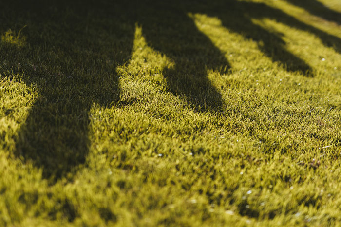 Green Color Selective Focus Grass Sunlight Plant Shadow Day Nature No People Land Growth Field Full Frame Close-up Outdoors Sport High Angle View Backgrounds Yellow Surface Level Focus On Shadow