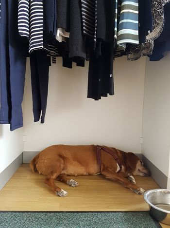 This friendly old dog is asleep in the shop of its owner. Pets Indoors  One Animal Domestic Animals Dog No People Day Animal Shop Sleeping Dog Fitting Room Fashion