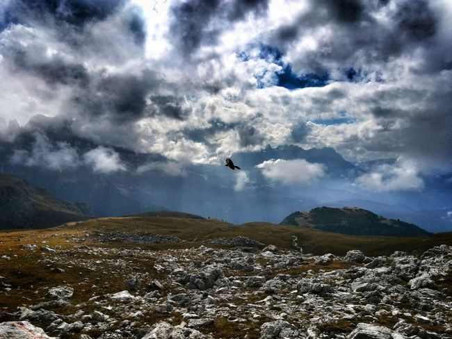 Outdoors Nature Happy Eyemphotography EyeEmNewHere Likeit No People Loveit Hike Berge Vogel Dolomiten Südtirol Bird Flying Airplane Mountain Mid-air Adventure Sky
