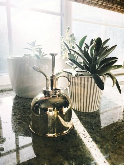 Kitchen Countertops Succulents Plants Houseplants Home Interior Window Light Home Interior Home Decor Plant Nature Sunlight No People Day Indoors  Container Flower Pot Glass - Material Close-up Growth Shadow Window Potted Plant