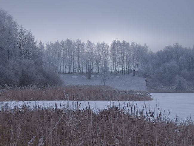 White frost covered trees in winter landscape against cloudy sky Cloudy Frost Bare Tree Beauty In Nature Bushes Cold Temperature Day Fog Grass Lake Landscape Nature No People Outdoors Reeds Scenics Sky Tranquil Scene Tranquility Tree Water White Frost Winter