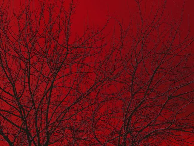 Tree Branches Tree Art Sunset Silhouettes TreePorn Red Color Red Is The New Black  Red Is Red Red Is Beautiful Red Is The Color