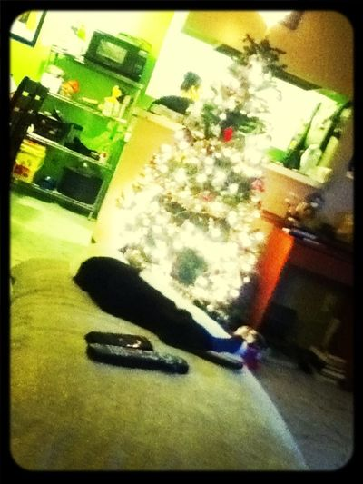 My Kitty Sleeping Next To The Christmas Tree.