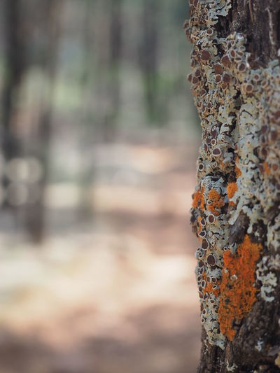 Tree Trunk Focus On Foreground Forest Fungus Lychen Nature Outdoors Rusty