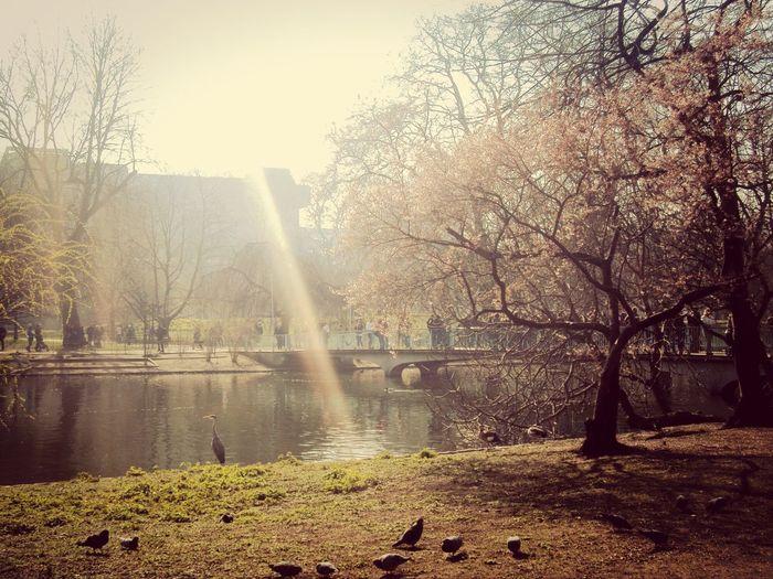 St James Park London  Spring Travel Photography