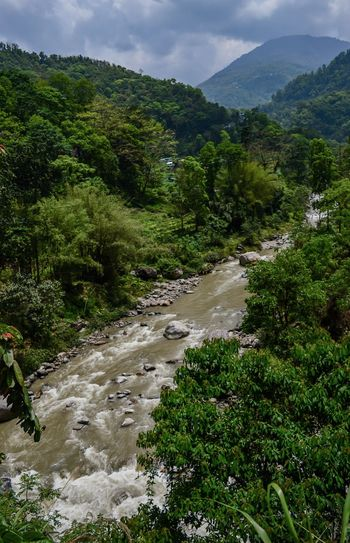 tiny river Forrest Photography Riverside Riverscape Landscape_photography Sikkim Wildlife Sikkimdiaries EyeEmNewHere Sikkimtourism Wildlife & Nature Flowing Water Tree Water Mountain Sky Landscape Green Color Lush - Description Lush Foliage Stream - Flowing Water Greenery Flood Flowing Torrential Rain Extreme Weather Growing Stream Forest Waterfall Flowing Water Woods The Traveler - 2018 EyeEm Awards