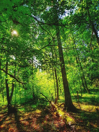 Relaxing Moments Forest Photography Beautiful Nature Light And Shadow Sunlight Natural Beauty Forestwalk Beauty In Nature Sunshine Green Green Green!  Green Color Freshness Tree Branch Full Frame Forest Green Color Growing Countryside