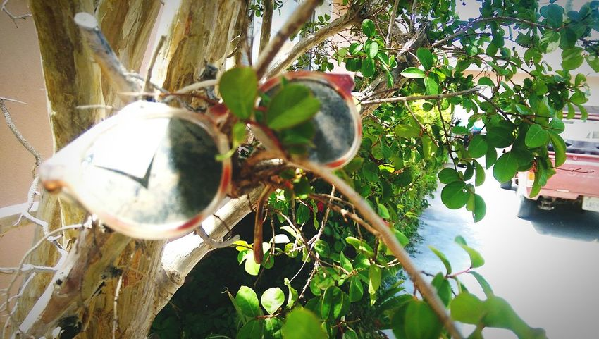 Showing Imperfection Shrubs Greenery Shrubs Weirdography Sunglasses Sunglasses👓 Sunglasses On