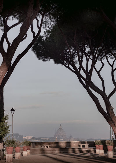 st peter's basilica in rome from far with trees Tree Plant Architecture Sky Nature Travel Destinations Built Structure Tourism Travel Water Day The Past Building Exterior History No People Outdoors Branch Religion City