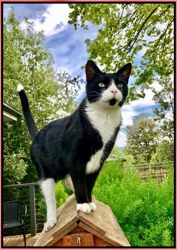 King of the jungle 🍃🐱🍃 Normal Photo Feline One Animal HelloEyeEm Kingofthejungle Catsofeyeem