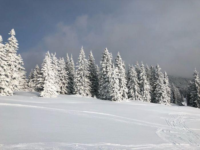 Deep of Winter