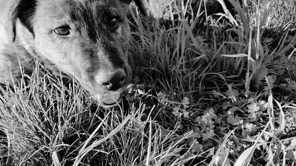Dogs Bestfriend Whatsup! EyeEm Selects Close-up Grass