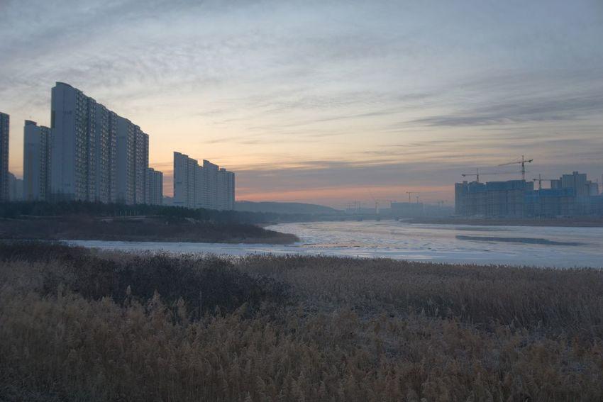 Field Reeds Korea Morning Sunrise Morning Korea River Frozn Cold Hwasung