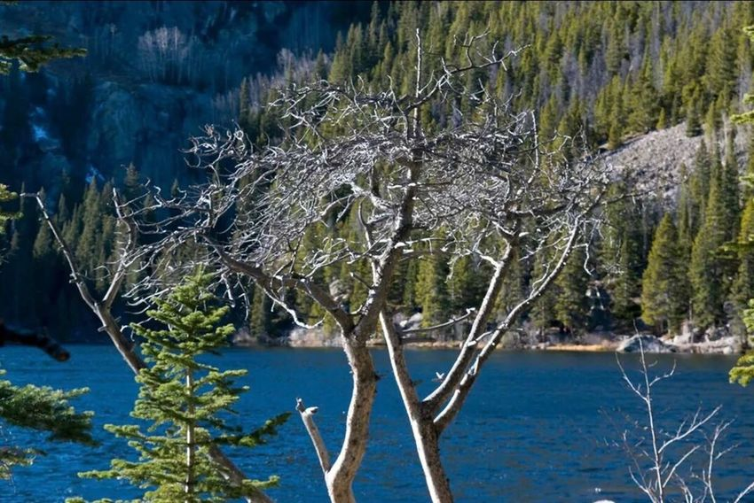 Bear Lake Tree Nature No People Tranquility Outdoors Growth Day