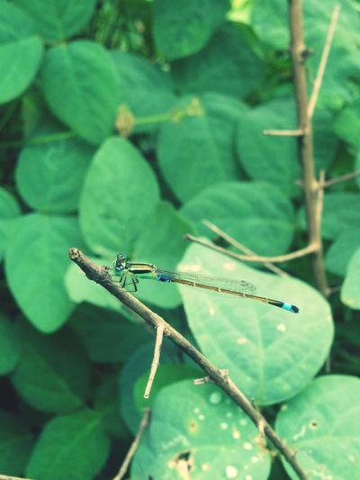 Tried to take a macro!! Nature Dragonfly Macro Beautiful Surroundings
