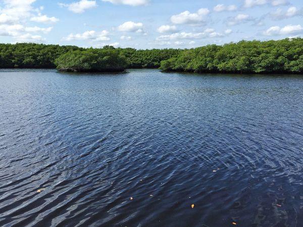 Mangrove islands in the Loxahatchee River Jonathan Dickinson State Park Florida Park Loxahatchee Loxahatchee River Mangrove Mangroves Mangrove Island