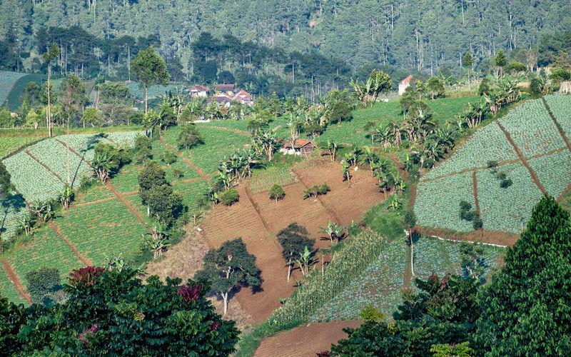 Plantation area