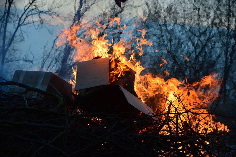 Bonfire on field against trees