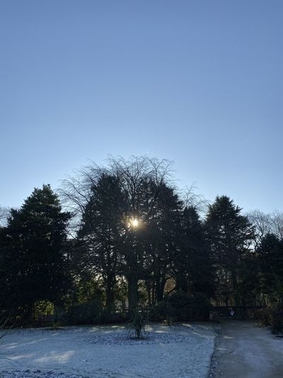 Trees against clear sky during winter