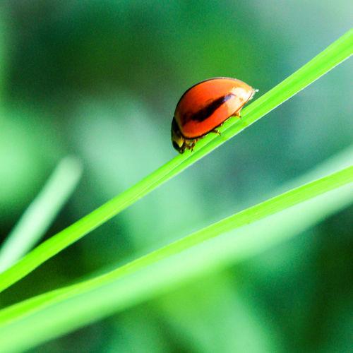 kumbang Animal