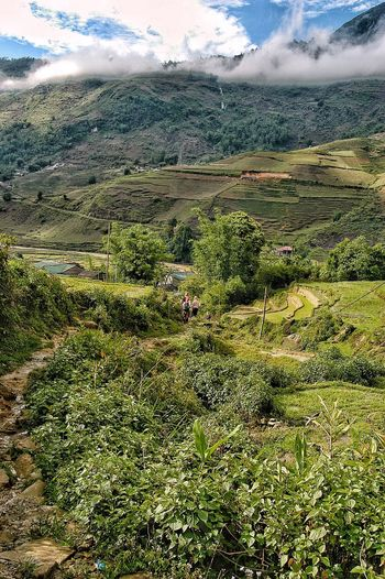 Vietnam Sapa Land Plant Nature Day Landscape Beauty In Nature Environment Tranquility Sky Growth Outdoors Tranquil Scene Field No People Green Color Scenics - Nature Cloud - Sky Agriculture Grass Water
