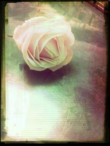 一個小女孩掉落的花,可是他跟媽媽說這不是他掉的!!