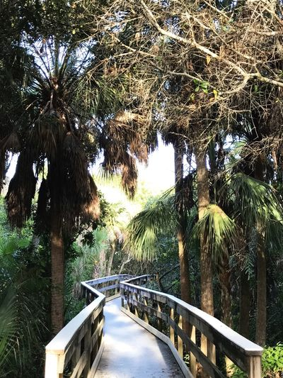 Tree Growth Railing Nature Palm Tree Outdoors Tranquility Day Tree Trunk Water The Way Forward No People Beauty In Nature Branch Scenics Tranquil Scene Bridge - Man Made Structure Sky Trails Florida Nature Manatee Park Palm Tree Boardwalk Photography