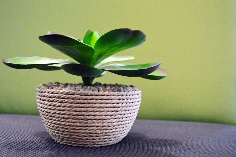 Close-up of houseplant on table against green wall