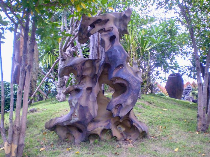 Tree Nature Grass Outdoors หินโชว์ ก้อนหิน ธรรมชาติสร้างมา