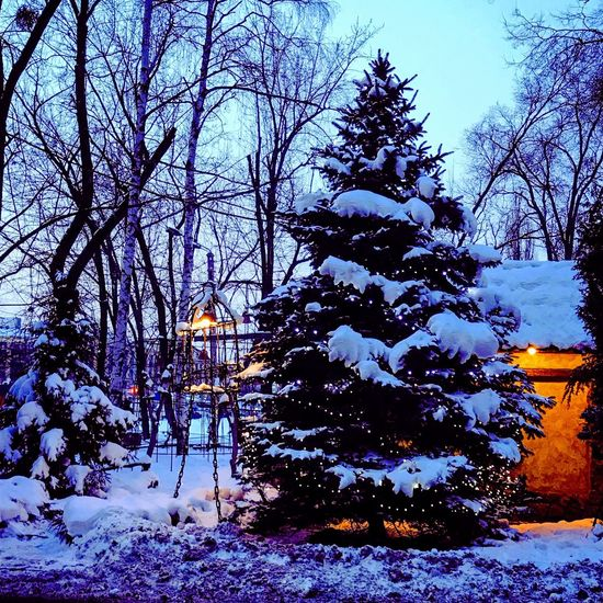 New Year Evening Winter Snow Cold Temperature Tree Nature Weather Bare Tree Beauty In Nature Day Frozen