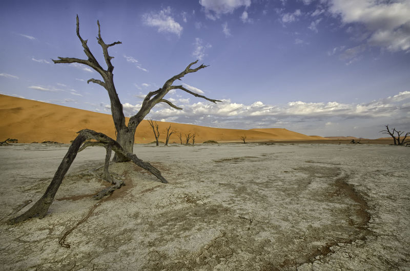 Dead Vlei, Namibia Dead Tree Namibia Silhouette Sossusvlei Trees Africa Beauty In Nature Clouds And Sky Day Landscape Nature Outdoors Sand Dune Scenics Sculptures Sky Sunrise Tranquil Scene Tranquility Windswept Tree