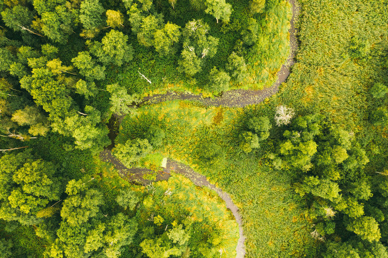 Aerial drone view of winding river in greenfield. lush wetlands of bird's eye view.
