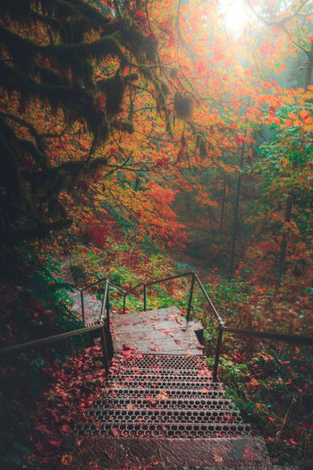 Hiking Wanderlust High Angle View Moody Dramatic Red Nature Nature EyeEm EyeEm Best Shots EyeEmNewHere EyeEm Gallery Colorful Pretty New Tree Leaf Autumn Branch Climbing Change Steps Steps And Staircases Staircase Autumn Collection Pathway Leaves Stairs Woods Fall