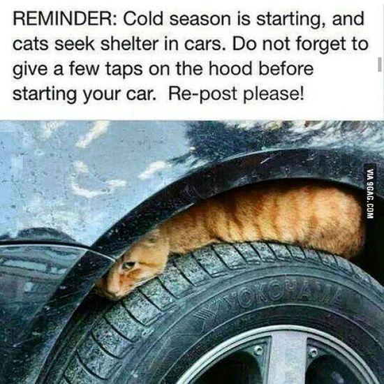 Lutfen dikkatli olalim !! Kedi Cat Pisi Araba Soguk Dikkat Lastik