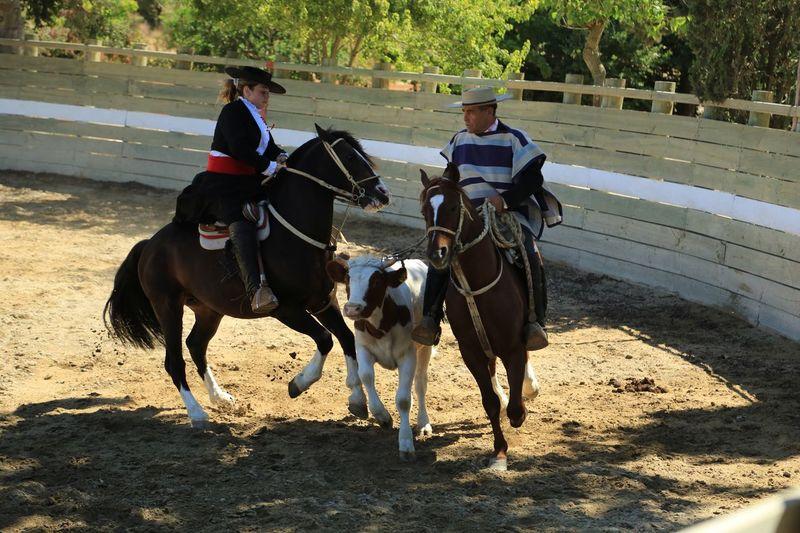 Ranch Santiago Chile Area