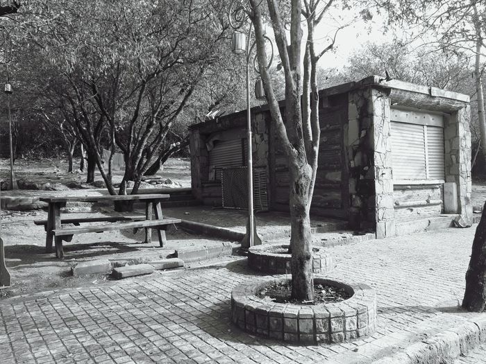 side walk, benches and tress. an old abandoned place Tree Architecture Building Exterior Built Structure