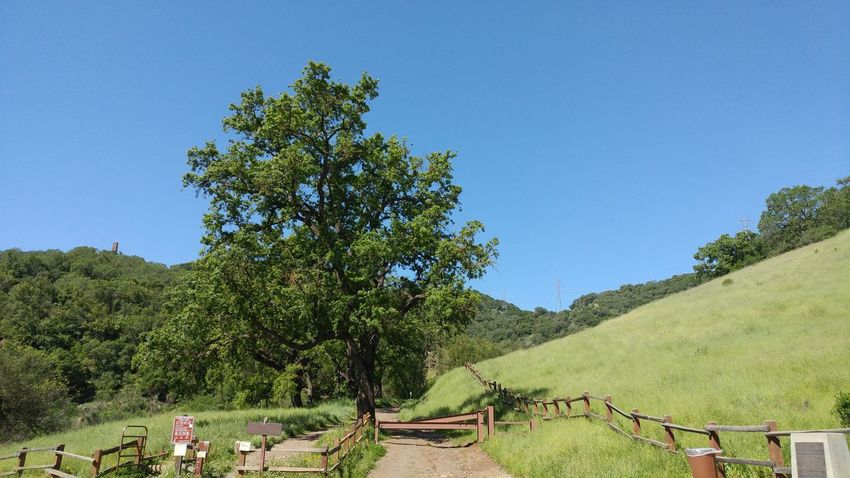 Tree Nature Growth Day Outdoors Beauty In Nature No People Green Color Plant Sky Flower National Park Entryway Enterance Trailhead Landscape_Collection Oak Tree Tree Grass Pasture Land Ranch Gate Beauty In Nature Walking Around Hike