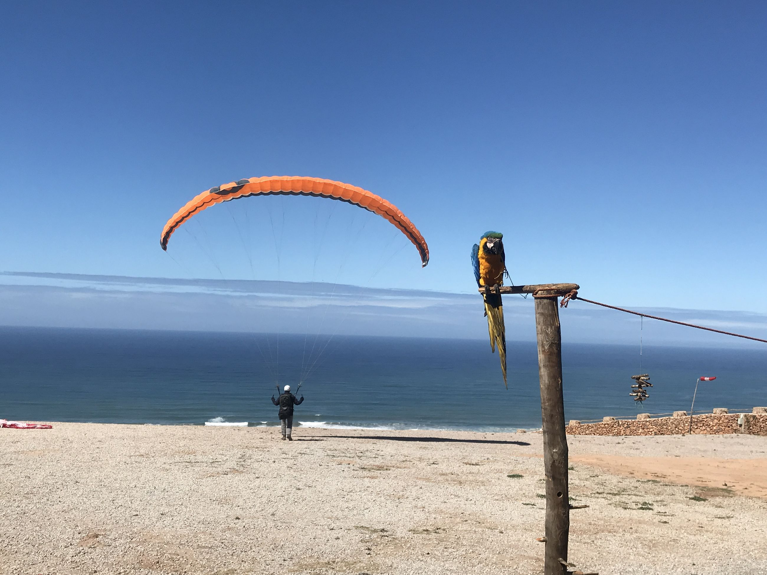 sky, sea, land, water, parachute, beach, nature, scenics - nature, paragliding, blue, day, beauty in nature, extreme sports, sport, adventure, clear sky, copy space, real people, horizon over water, outdoors