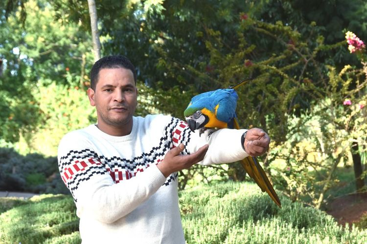 Portrait of man holding macaw in park