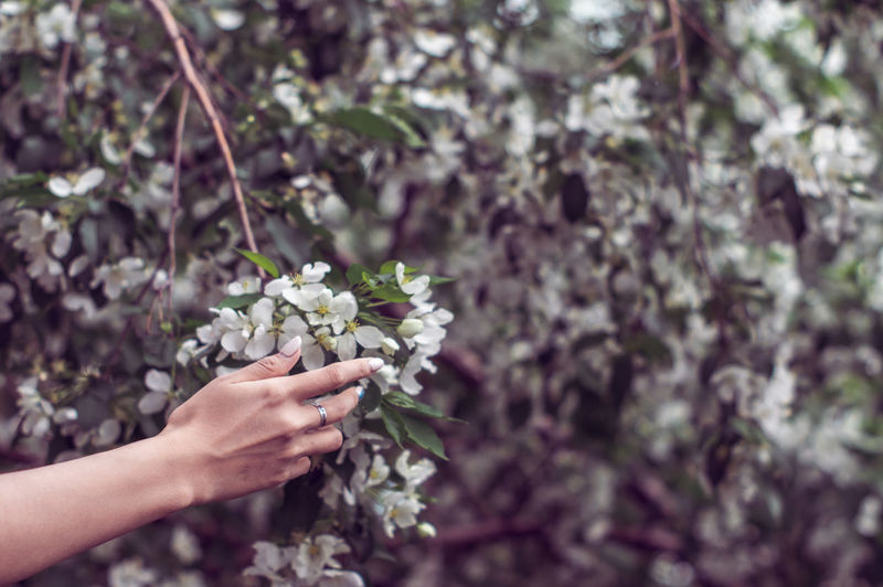 Midsection of person holding flowering plant