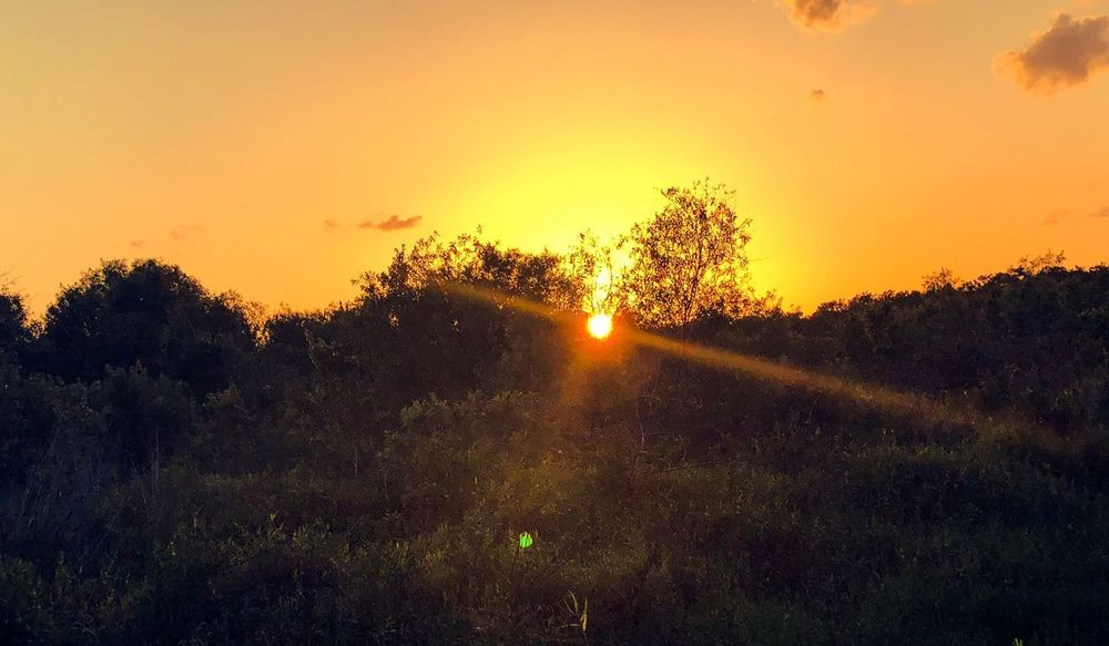 Last few rays of the day. Cya soon🌞 Sky Sunset Plant Beauty In Nature Tree Scenics - Nature Tranquility Nature No People Landscape Orange Color Sunlight Outdoors Growth Environment Sun Tranquil Scene Field Idyllic Land