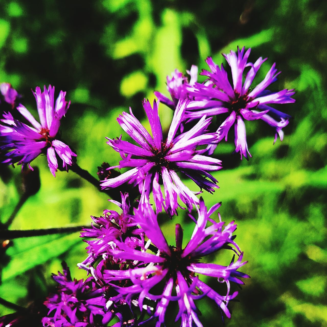 flower, purple, growth, beauty in nature, fragility, nature, petal, plant, no people, freshness, outdoors, blooming, day, flower head, close-up