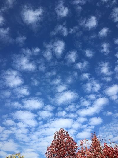Cloud pattern Cloud - Sky Low Angle View Nature No People Blue Pattern