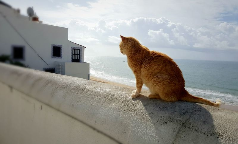 Cat and the sea One Animal Pets Animal Animal Wildlife Domestic Cat Mammal No People Animals In The Wild THREATS Domestic Animals Day Cityscape Beauty In Nature Tranquility Nature Sky Blue Adapted To The City