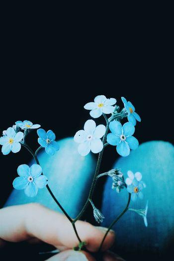 Flower Mobile Photography VSCO Vignette