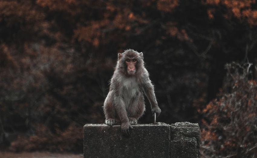 Portrait of monkey on wall