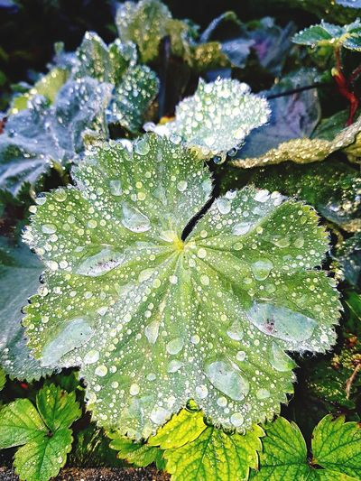Raindrops Plant Growth Beauty In Nature Day No People Green Color Leaf